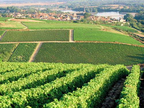 Vignoble de Pouilly sur Loire